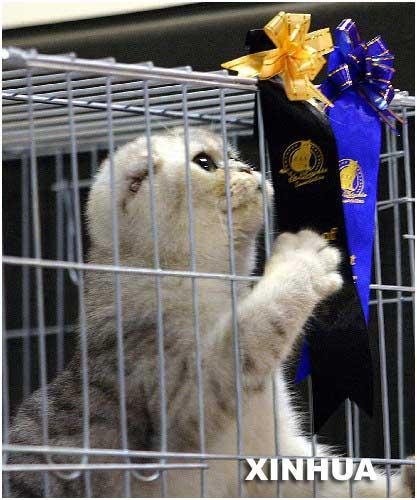 2005世界名猫展图片
